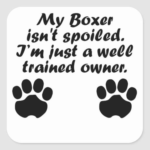 Dueño bien entrenado del boxeador pegatina cuadradas personalizada