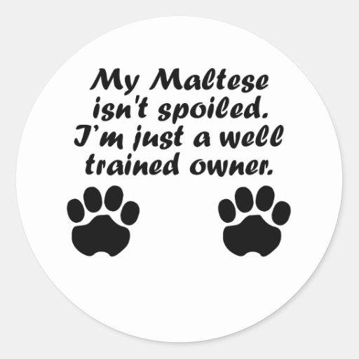 Dueño maltés bien entrenado etiquetas redondas