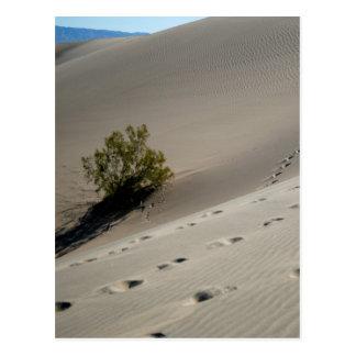 Dunas 4 de Death Valley Postal