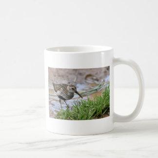 Dunlin contra el agua coloreada taza clásica