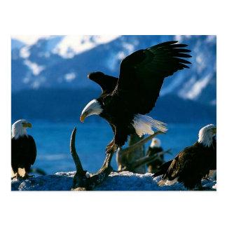 Eagle 19 postal