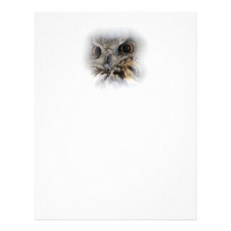 Eagle-búho eurasiático folleto 21,6 x 28 cm