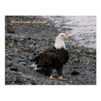 Eagle calvo adulto en la playa, isla de Unalaska Postal