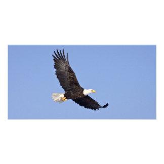 Eagle calvo americano tarjeta fotografica