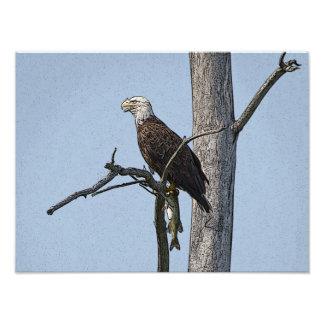 Eagle calvo con un pescado fotografía