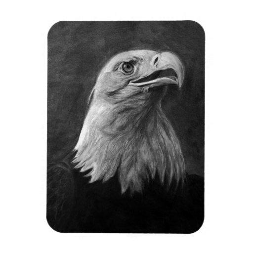 Eagle calvo, grafito dibujado mano imanes