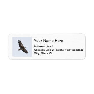 Eagle calvo (juvenil) etiqueta de remite