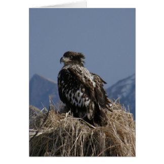 Eagle calvo juvenil por la orilla felicitacion