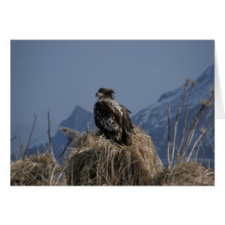 Eagle calvo juvenil por la orilla tarjeta de felicitación