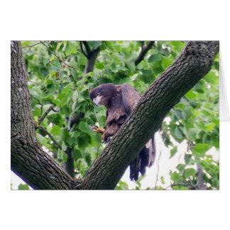 Eagle calvo juvenil tarjeta de felicitación