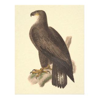 Eagle calvo (leucocephalus de Haliaetos) Folleto 21,6 X 28 Cm
