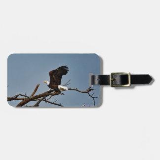 Eagle calvo quita la etiqueta del equipaje
