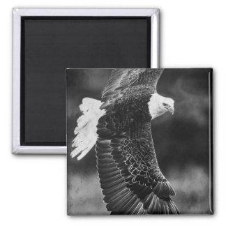 Eagle en vuelo blanco y negro imanes