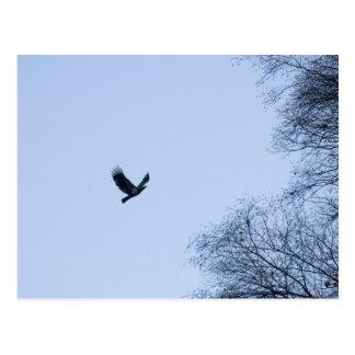Eagle juvenil - presa de Conowingo Postal