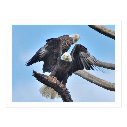 Eagles calvo postal