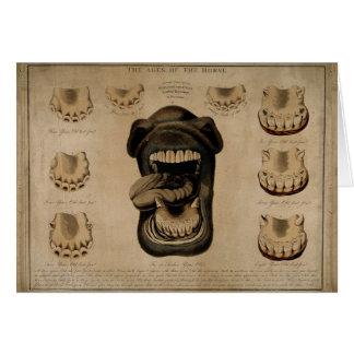 Edades de los dientes de la boca del caballo que tarjeta de felicitación