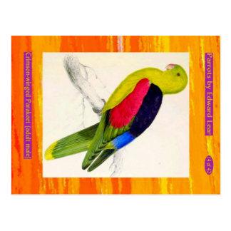 Edward Lear. Parakeet Carmesí-con alas. Varón Postal