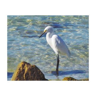 Egret de Snowy White en resaca Impresión En Lienzo