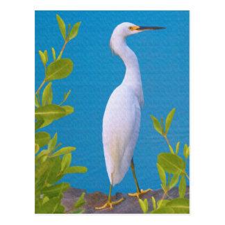 Egret nevado en la postal de la charca