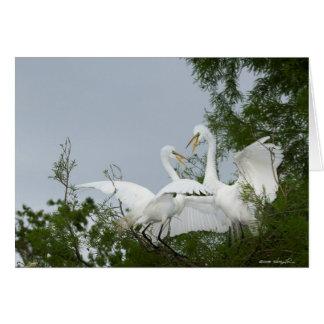 Egrets en duelo tarjeta de felicitación