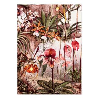 Ejemplo 1911 de la variedad de la flor de la orquí tarjetas de visita grandes