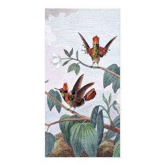 Ejemplo Acerino-Necked del colibrí Tarjeta Fotográfica