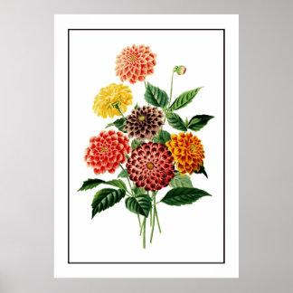 Ejemplo botánico colorido de las flores póster