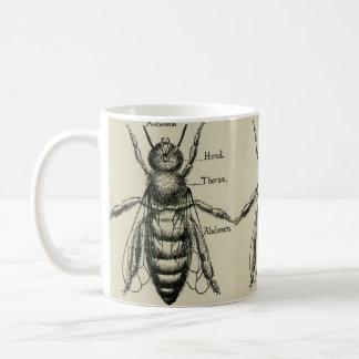 Ejemplo de la anatomía de la abeja - taza del