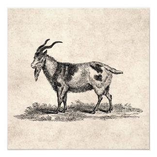 Ejemplo de la cabra nacional del vintage - cabras invitación 13,3 cm x 13,3cm