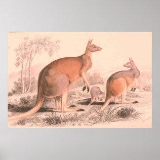 Ejemplo de la familia del canguro del vintage póster