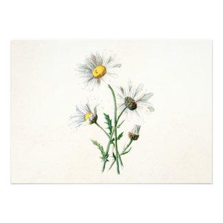 Ejemplo de la flor salvaje de las margaritas del v comunicado personal