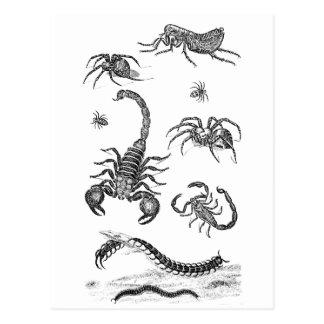 Ejemplo de la pulga de la araña del escorpión de postal