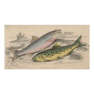 Ejemplo de la trucha del río del vintage (1866) póster