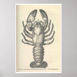 Ejemplo de los cangrejos del vintage (1896) póster