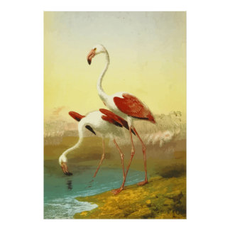 Ejemplo de los flamencos póster