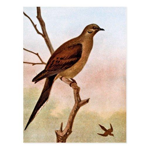 Ejemplo de luto del vintage de la paloma tarjetas postales