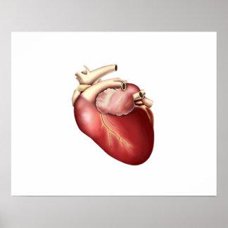 Ejemplo del corazón humano impresiones