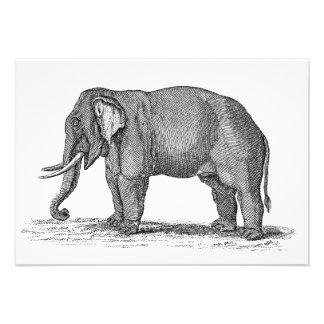 Ejemplo del elefante de los 1800s del vintage - el invitaciones personalizada