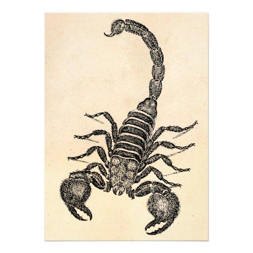 Ejemplo del escorpión de los 1800s del vintage - e anuncio