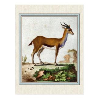 Ejemplo del Gazelle del vintage Postal
