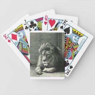 Ejemplo del león baraja de cartas bicycle