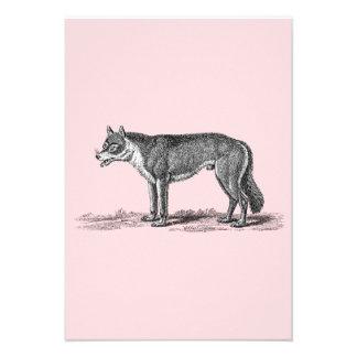 Ejemplo del lobo del vintage - plantilla de los lo anuncios