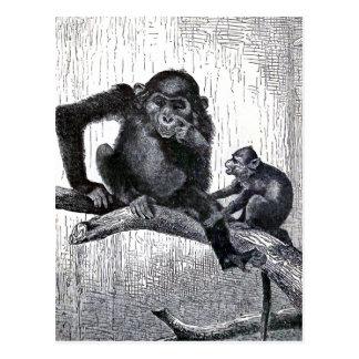 """Ejemplo del mono del vintage de la """"juventud y de postal"""