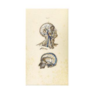 Ejemplo del vintage de venas humanas lienzo