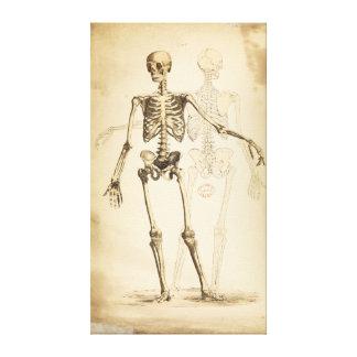 Ejemplo del vintage del esqueleto humano lienzo