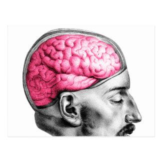 Ejemplo médico del vintage de los cerebros postal