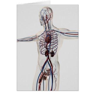 Ejemplo médico: System 3 reproductivo masculino Tarjeta De Felicitación