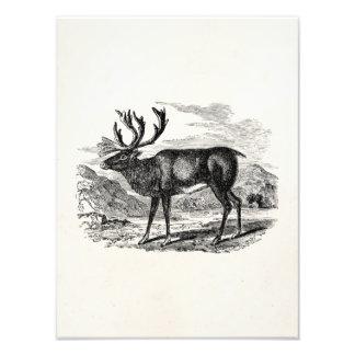 Ejemplo personalizado reno de los ciervos del foto
