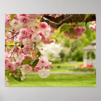 El ajardinar perfecto con el cerezo floreciente ad posters