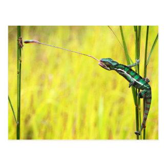 El almuerzo de un lagarto postal
